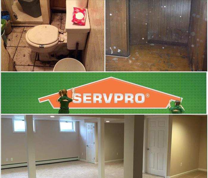 Sewer & Mold Remediaiton